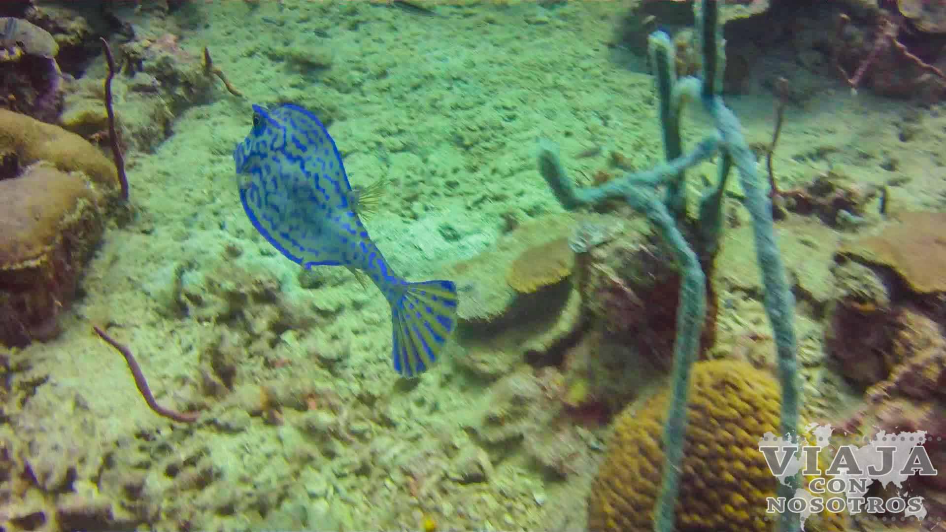 Guía de buceo en Bocas del Toro