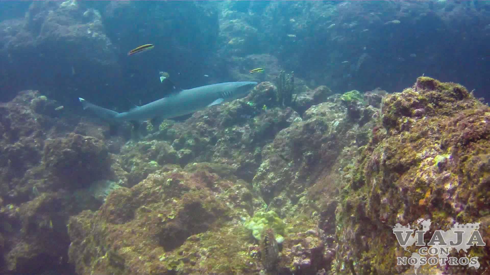 Peces que se ven buceando en Isla Coiba