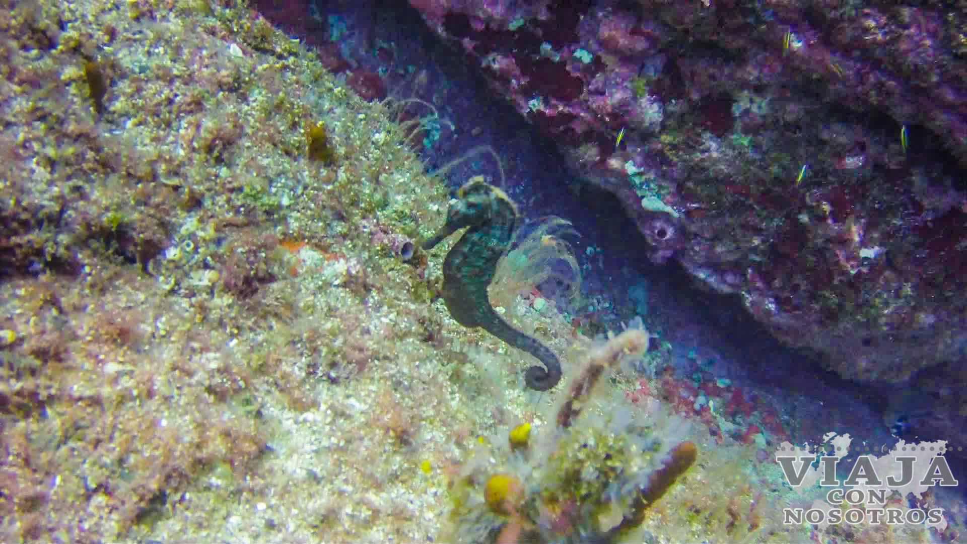 Todo lo que debes saber para visitar isla Coiba
