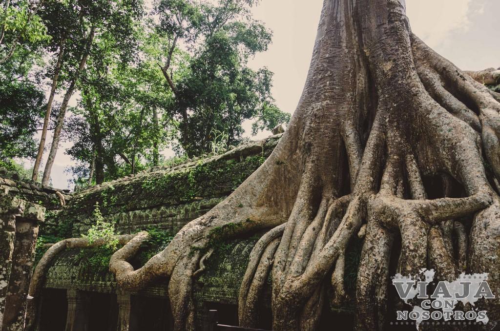 Guía completa de viaje de Siem Reap