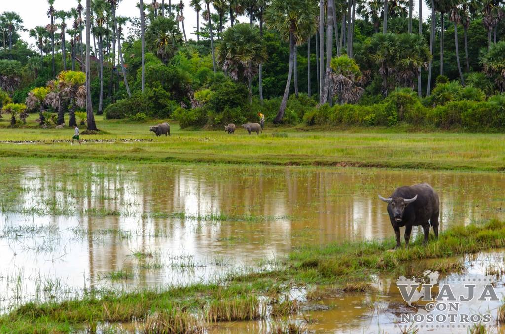 Que hacer en Siem Reap a parte de los Templos de Angkor