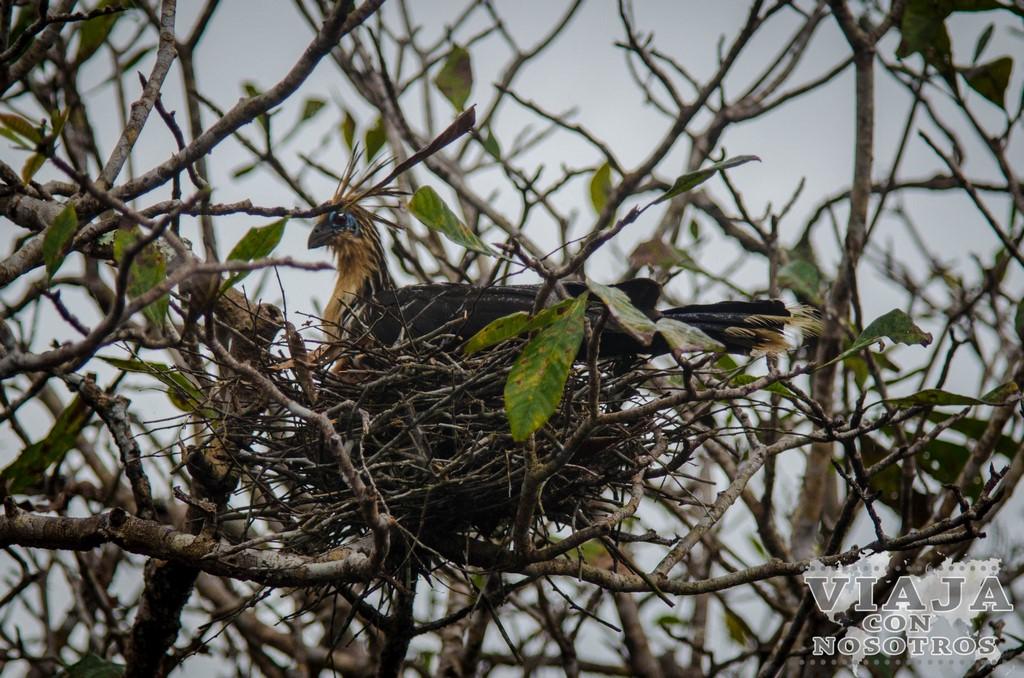 Pájaros de la Reserva de Cuyabeno