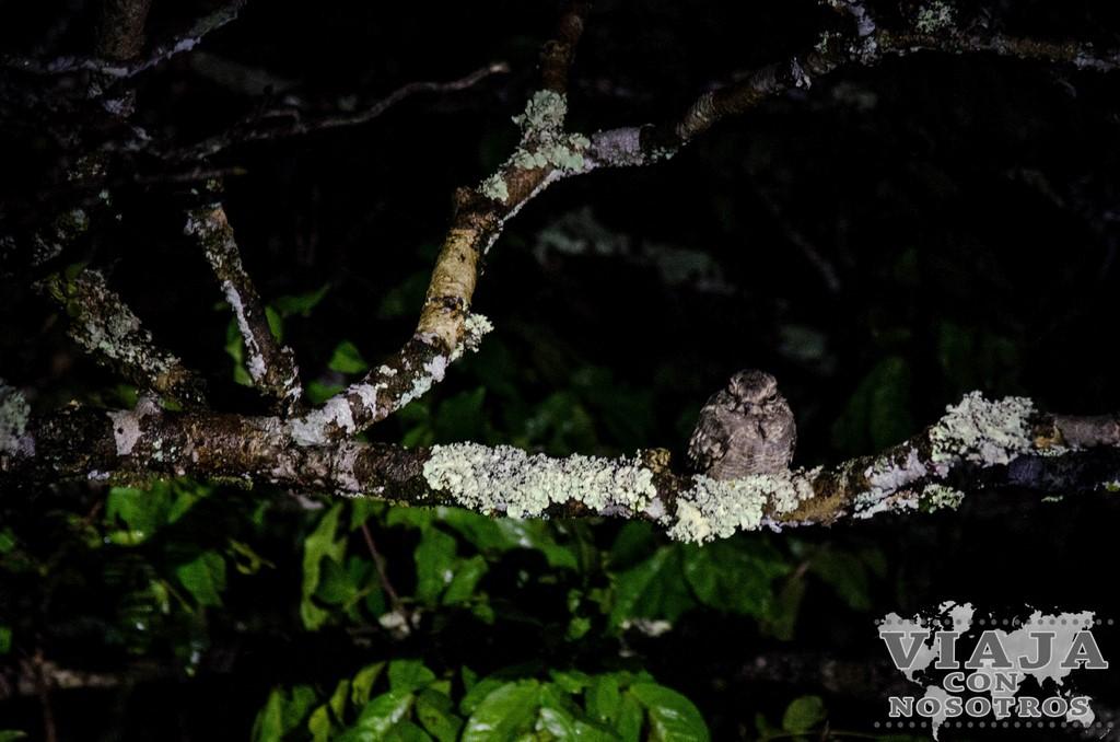 Mejores fotografías de la Reserva de Cuyabeno