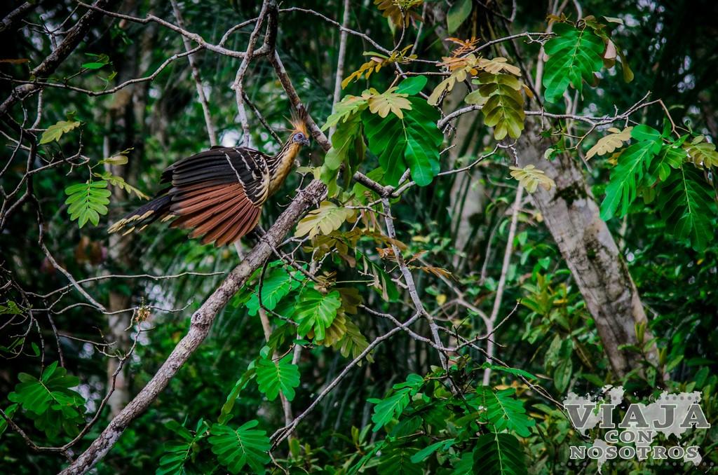 Recomendaciones para visitar el Amazonas Ecuador