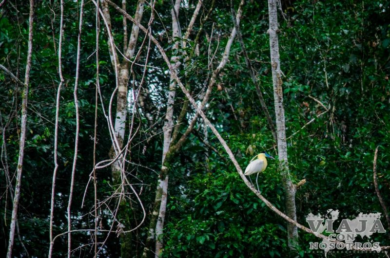 Aves de la Reserva de Cuyabeno