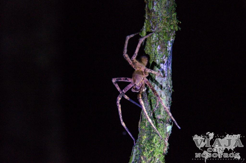 Que animales se ven por la noche en Cuyabeno