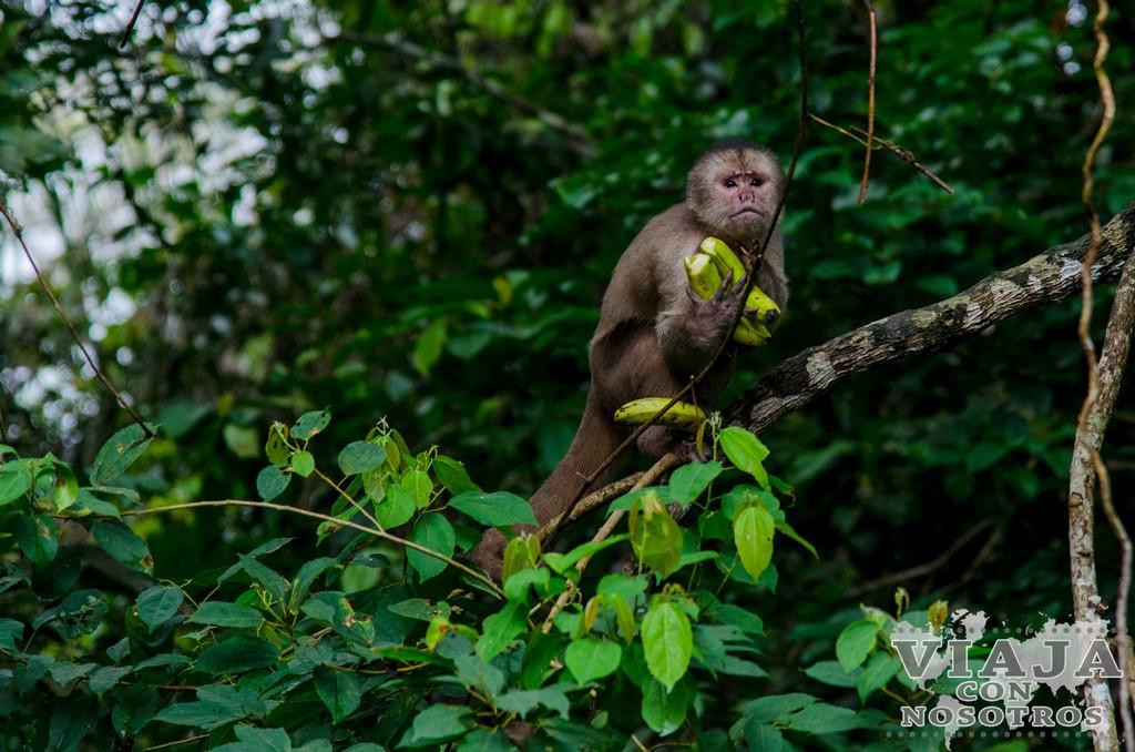 Cuantos animales vas a ver en la Reserva de Cuyabeno