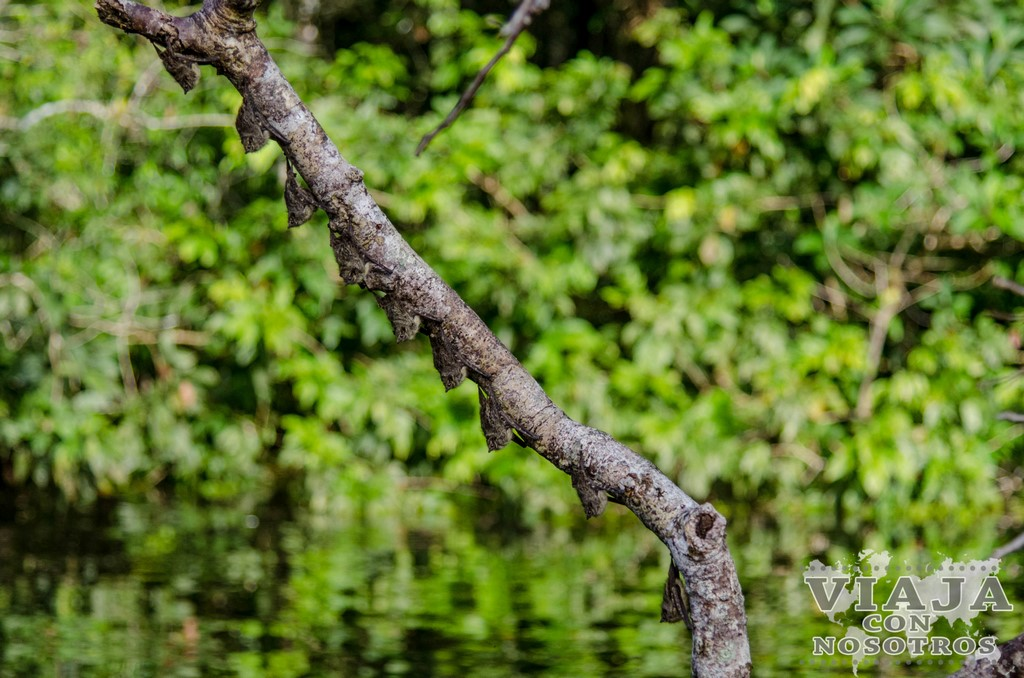 Cuanto se tarda de Lago Agrio a Latacunga