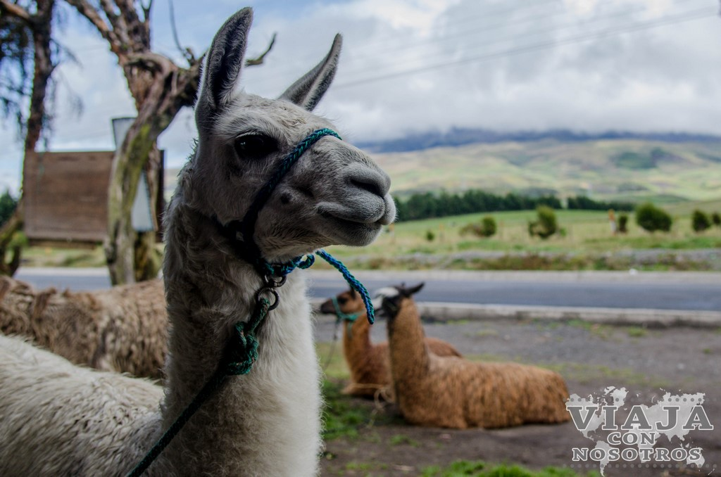 What to see and to do in Riobamba