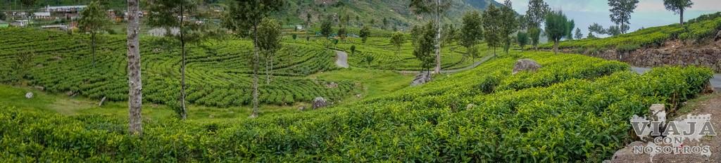 Que ver y que hacer en Sri Lanka