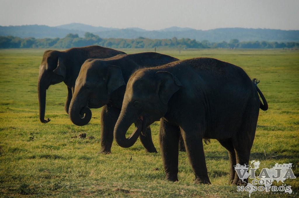 Consejos antes de viajar a Sri lanka