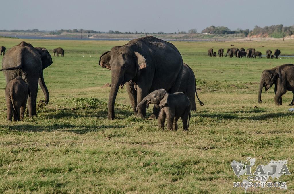 consejos y precios para visitar Parque Nacional Minneriya