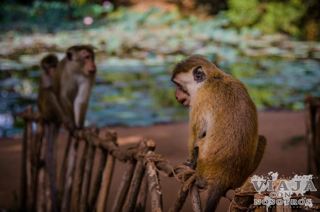 Consejos y recomendaciones para visitar Sigiriya