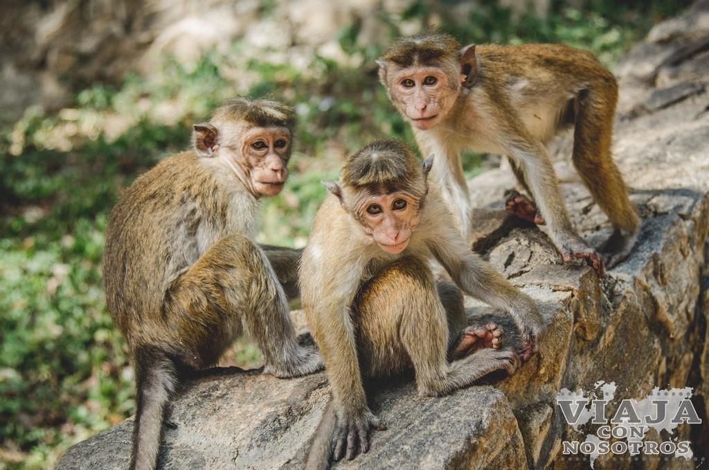 Cuevas de Dambulla visitar