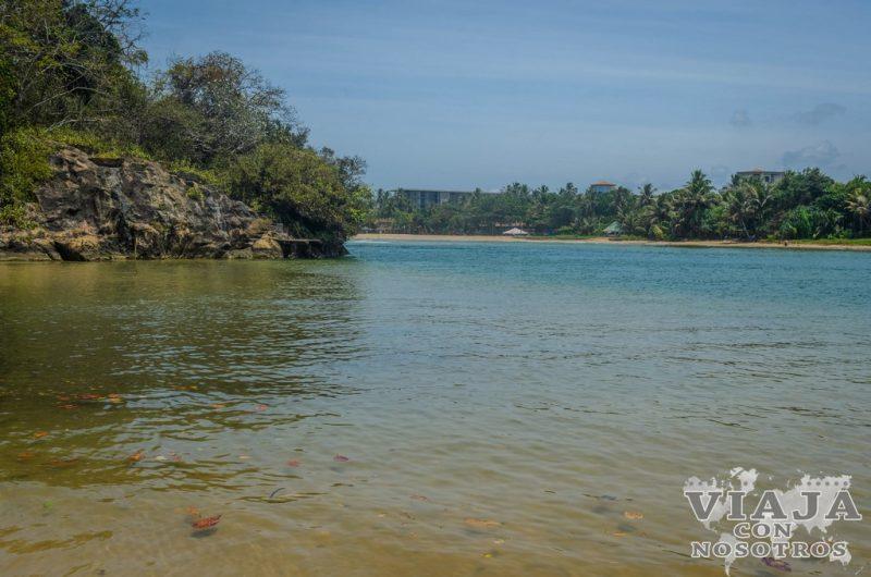 Lee esto si viajas a Sri Lanka