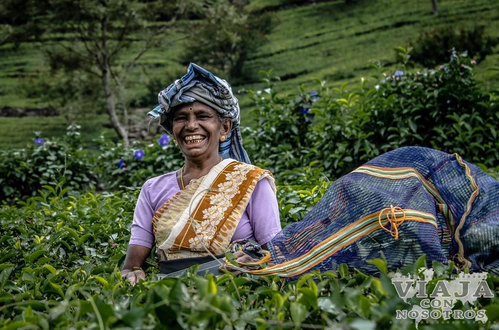 Donde y como fotografiar las recolectoras de té de Sri Lanka