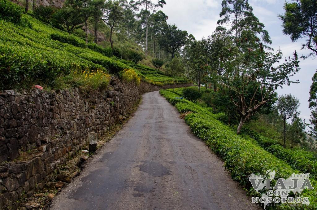 Las más bonitas plantaciones de té de Sri Lanka