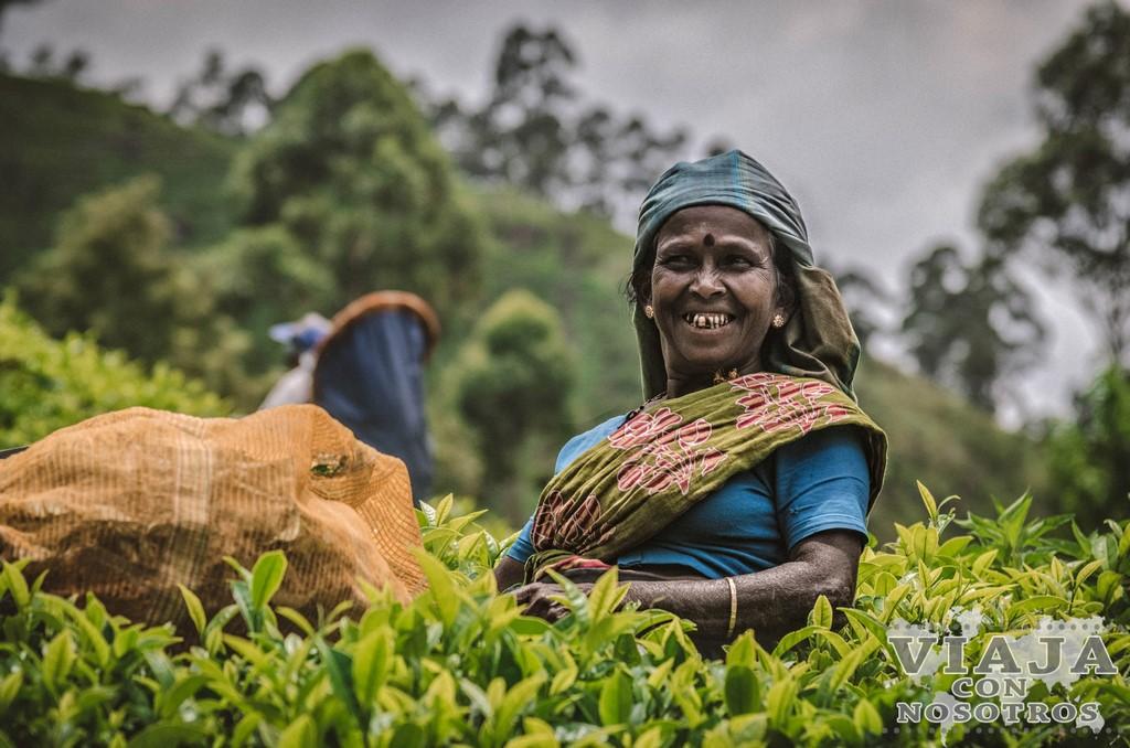 Las mejores fotografías de campos de té de Sri Lanka
