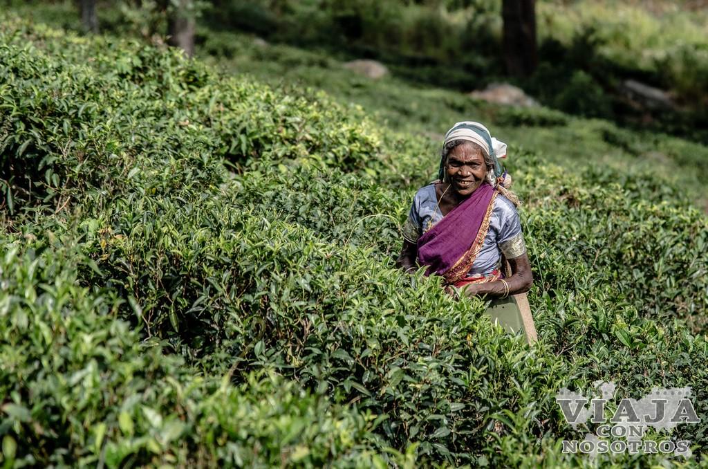 Recorrido de las plantaciones de té de Haputale