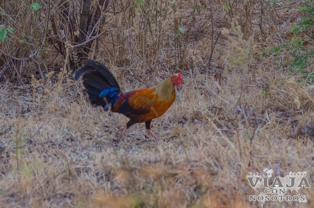 Advertencias en el Safari en el Parque Udawalawe