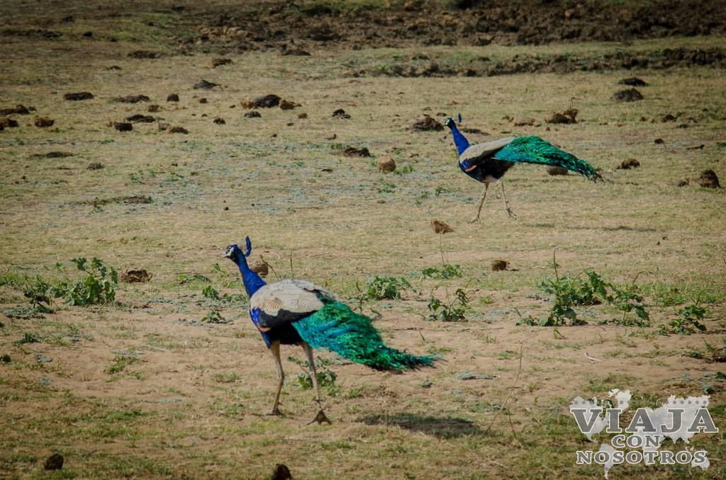 Fotografías en el Safari en el Parque Udawalawe