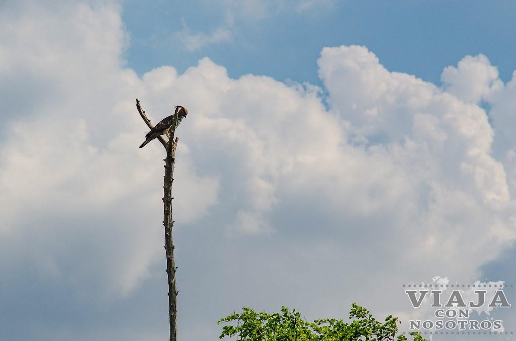 Precio de Safari en el Parque Udawalawe