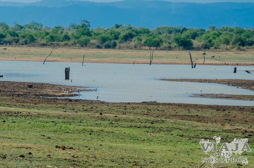 Recomendaciones y consejos en el Safari en el Parque Udawalawe