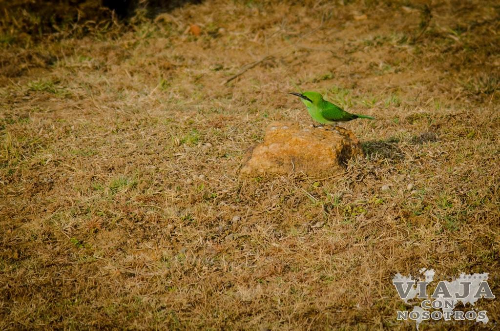 Recomendaciones para hacer el Safari en el Parque Udawalawe