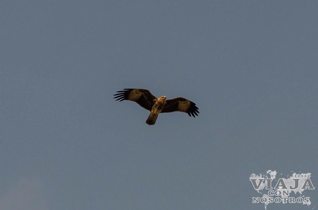 Que animales se even en el Safari en el Parque Udawalawe