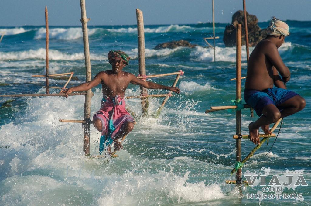 Mejores fotografías de los pescadores zancudos