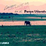 HAPUTALE - EMBILIPITIYA: Safari en el Parque Udawalawe