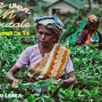 HAPUTALE: Plantación de té Lipton´s Seat