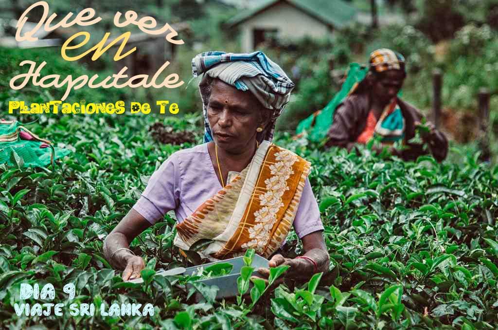 las fotos más impresionantes de las recolectoras de té
