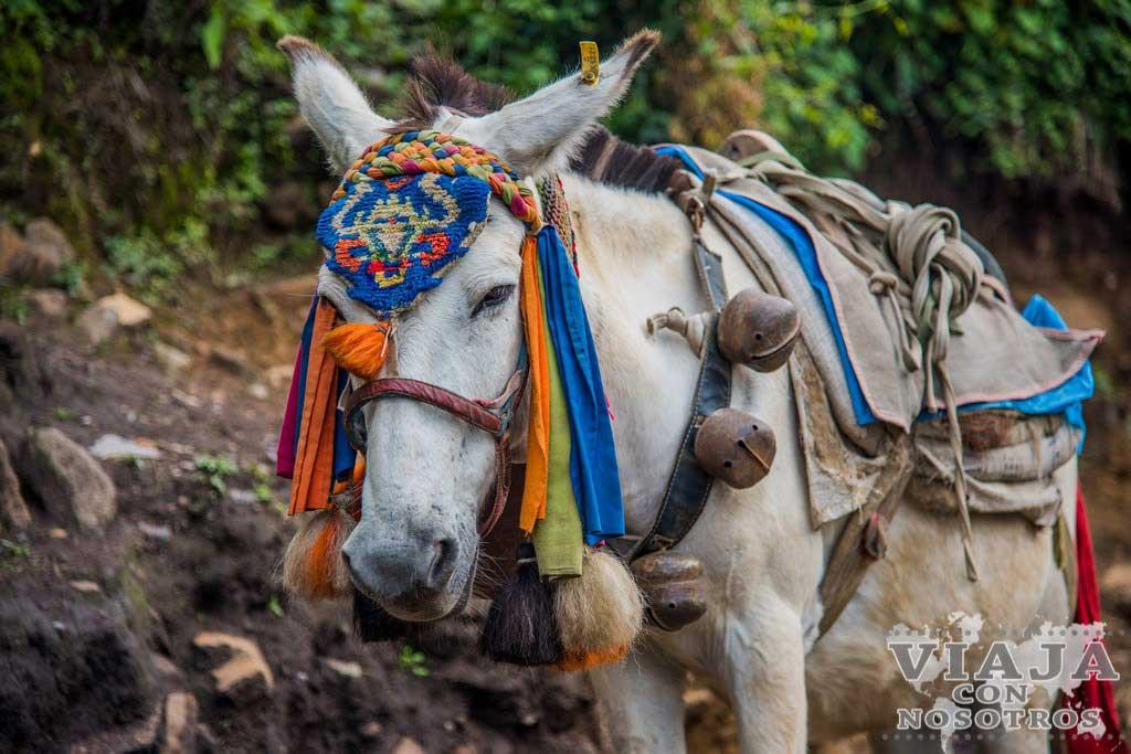 Precauciones para hacer el trekking de los Annapurna