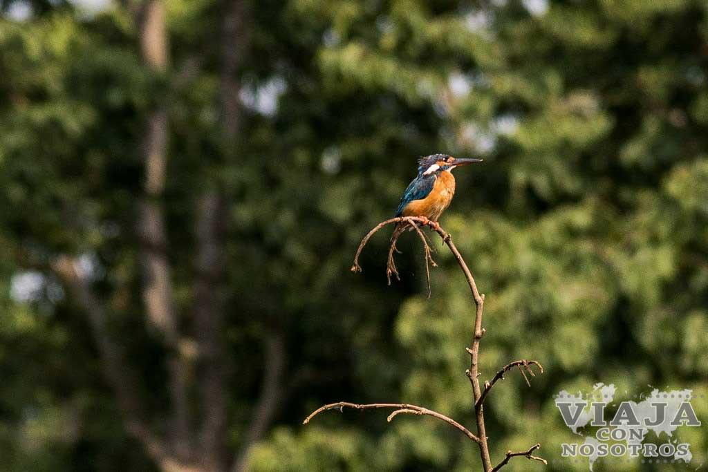Mejores cosas que hacer en Chitwan