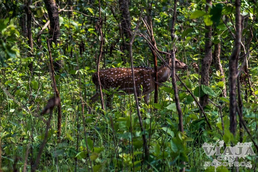 Como ver Rinocerontes en Chitwan