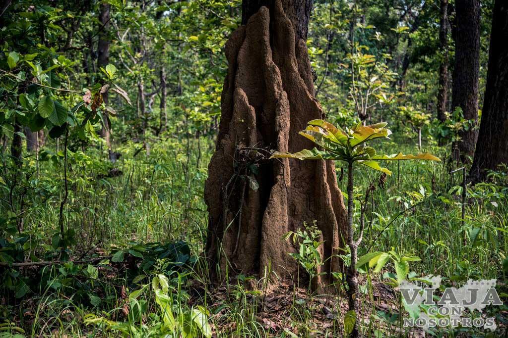 Ver rinocerontes en Chitwan