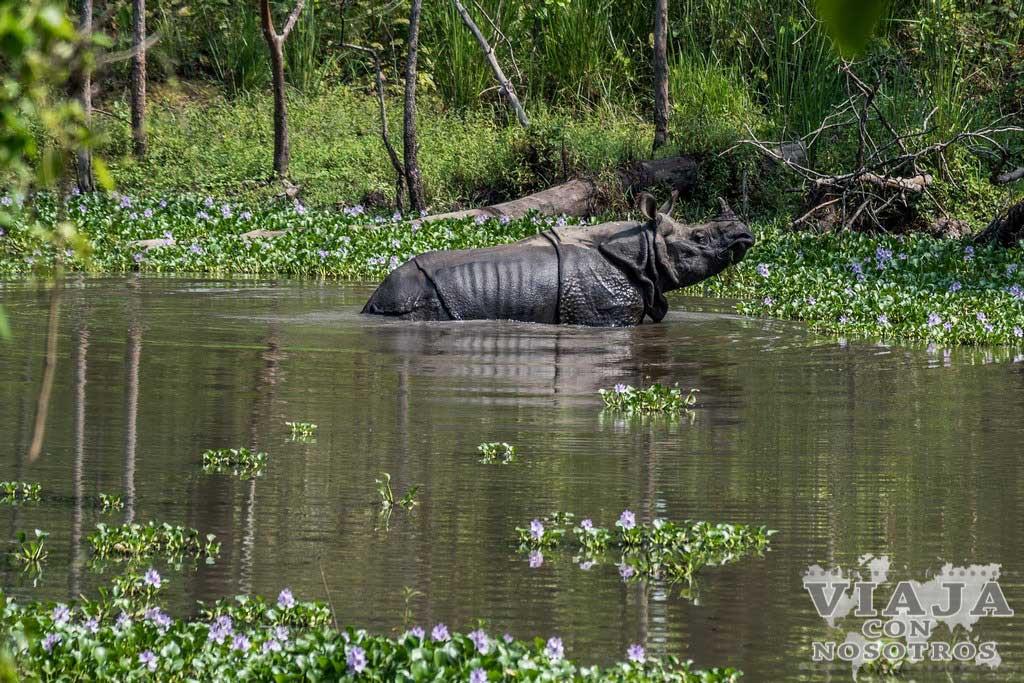 Animales que se ven en Chitwan