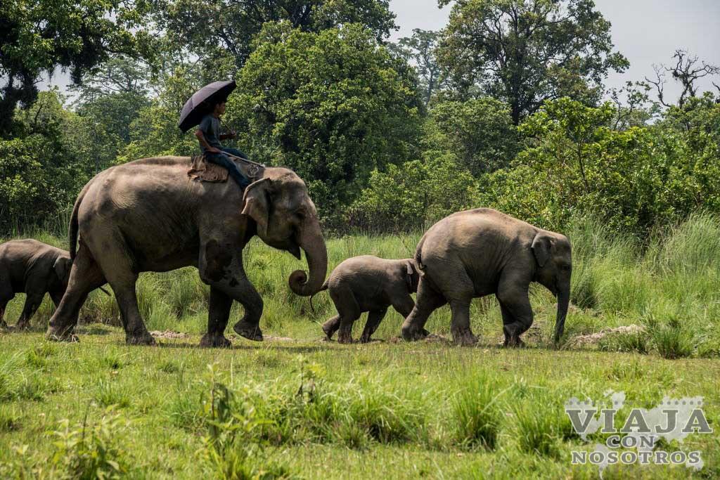 Tours que puedes hacer en Chitwan