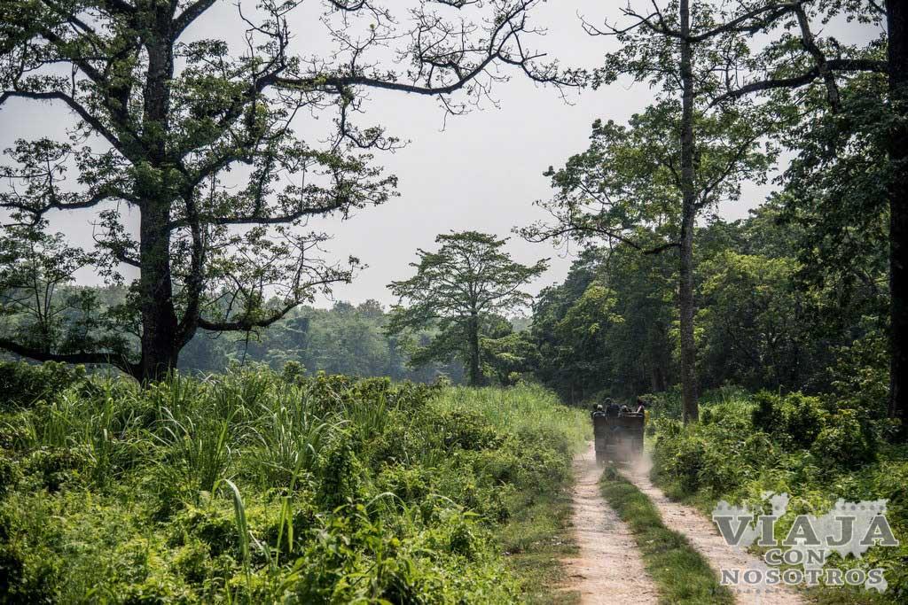 Consejos para visitar Chitwan