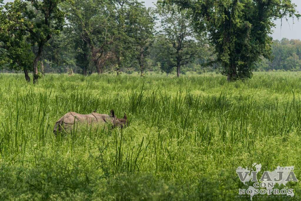 Mejor época para visitar Chitwan