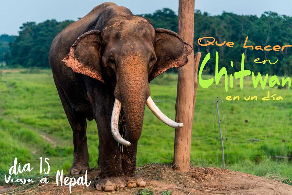 Que ver y que hacer en Chitwan