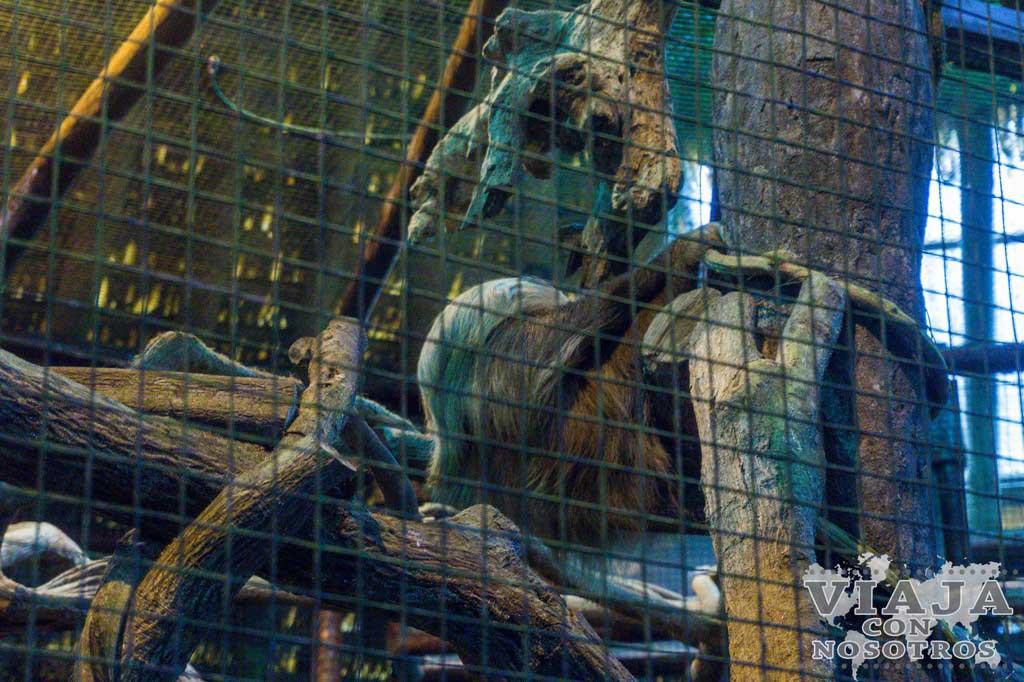 Animales en la Catarata de la Paz