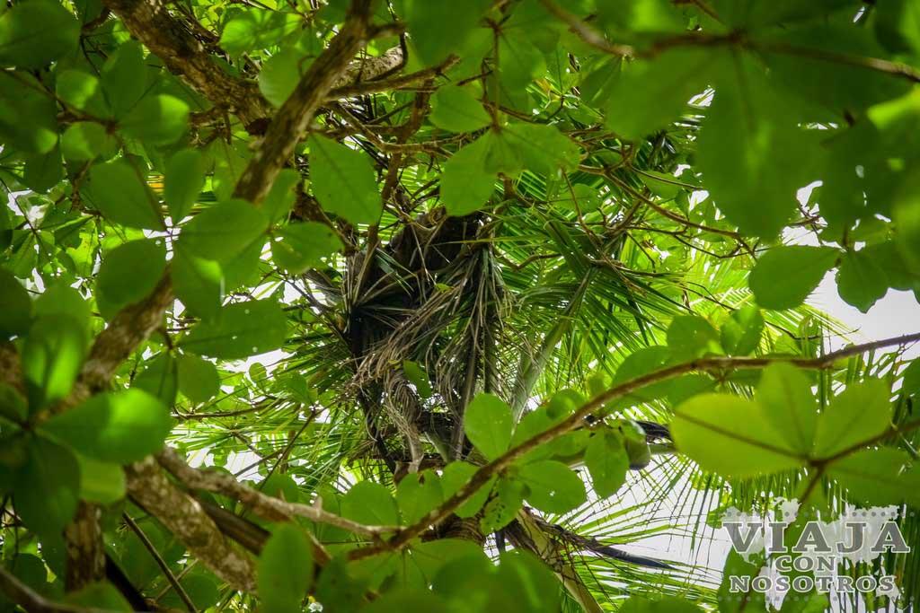 Que animales hay en el refugio Gandoca manzanillo